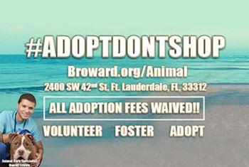 Broward County Animal Care Adoption